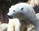 旭山動物園号1DAYピクニック号